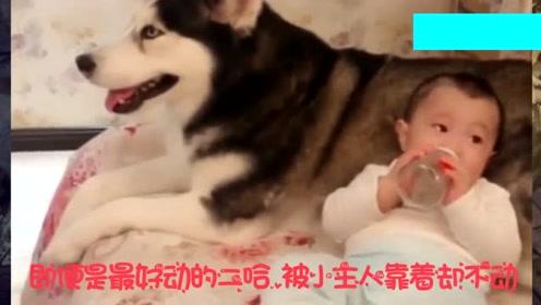 狗狗跟小主人在一起会出现什么画面?网友:这样太可爱了,我也要养一只!
