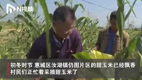 """这个季节来""""甜玉米之乡""""看甜玉米飘香"""
