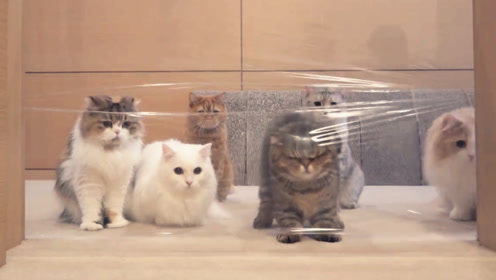 用保鲜膜把门封住,7只宠物猫会怎么做?网友:简直萌化了!