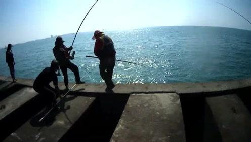 黑吉钓,台中港北堤,隔壁钓友上巨物,魔鬼鱼还真没钓到过
