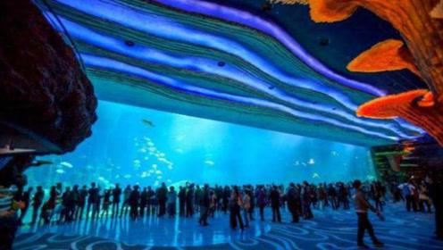 世界上最大的海洋馆,安检比机场还严格,养着全球最大的鱼类!