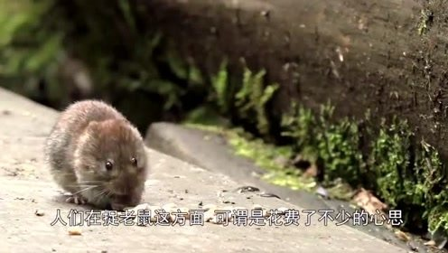 """抓到老鼠后怎么处理呢,小伙把老鼠绑在""""火箭""""上,估计老鼠的内心是崩溃的"""