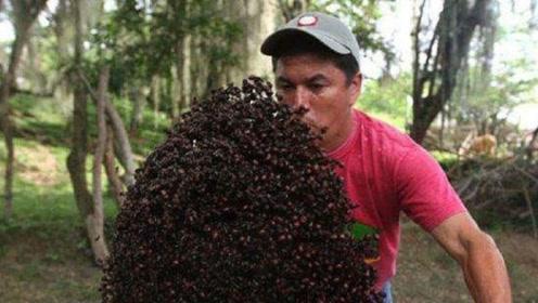 这个地方把蚂蚁当零食,翻炒之后揣兜里当花生吃,一般人还吃不起