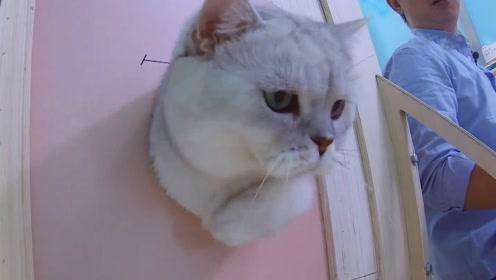 猫是液体的,实锤了!