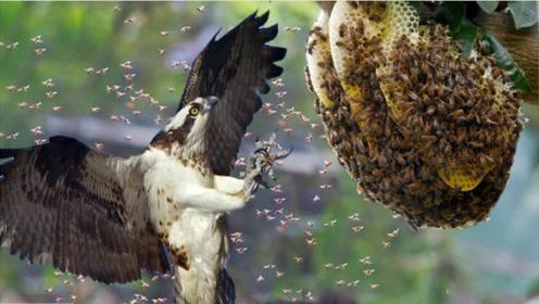 这种鸟真是太凶了!竟敢单挑整个蜂巢,马蜂都被吃到没有脾气