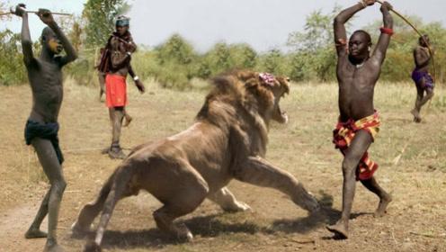 """狮子为什么害怕""""马赛人""""?镜头拍下全过程,真是不可思议!"""