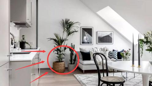 """家里这""""3个位置""""放植物,财神爷最喜欢了,难怪越住越有""""钱"""""""