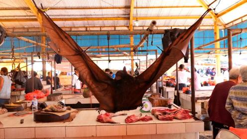 这么大的蝙蝠还是第一次见,菜市场公开售卖,回家煮一下就能吃了
