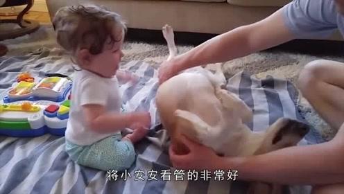 国外妈妈不顾家人反对,竟雇狗狗当保姆照顾自己的孩子,网友这月嫂够特殊!