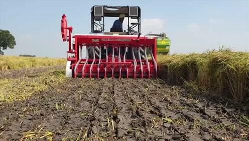 大叔新买的播种机,老板说这是爆款,下地试试,播种效果不得了