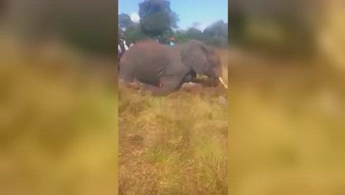 残忍至极!肯尼亚大象因袭击居民被围攻砍伤 鲜血淋漓倒地身亡