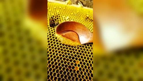 用木勺轻轻一刮蜂巢,接下来的一幕,真想来一口尝尝!