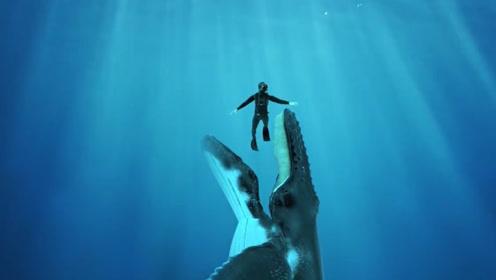 在海里潜水,要是不幸被鲸鱼误吞了,还有生存的希望吗?