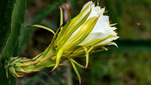 世界上最大的花,不仅长得好看,还是肺结核的大克星!