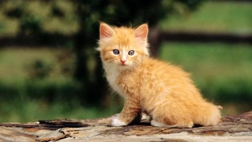 养宠:国人养宠物一年花1708亿元!养宠物要开始征收宠物税?