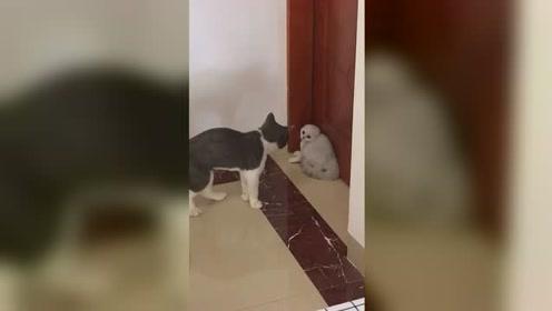 各路大神如何让这种刚抱回家的小猫快速的和大猫友好相处呢