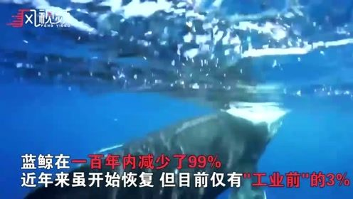 鲸鱼能拯救地球免受温室气体侵害:一头相当于几千棵树