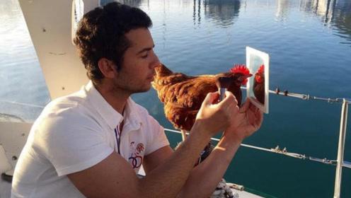 """世界上最幸福的""""鸡"""",跟着帅哥环球旅行,半路下蛋给主人吃!"""