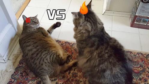 """两只猫咪吵架,双双使出了""""猫拳"""",网友直呼喵星人惹不起!"""