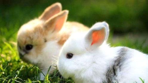 属兔的人有个最大性格缺陷,如能避免,或成为人生赢家