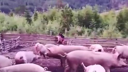 一只熊闯进农场,抓一只猪就准备跑,结果忍住不要笑