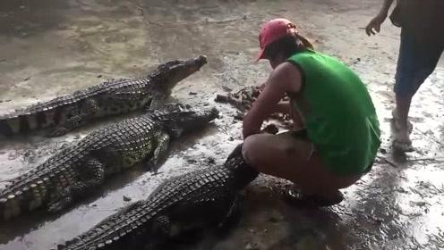 鳄鱼大战人类,真没想到凶残的水中霸主会被人类一招制服,哈哈