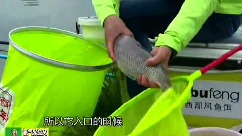 大鲫鱼都用抄网抄上岸了,结果一个不小心还是让它跑了