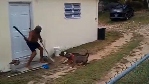 这两条狗飘了,大爷1米大刀都拎出来了还不撤