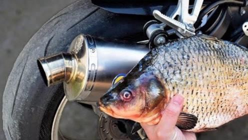 摩托车排气管究竟能产生多大热量?老外用鱼测试,香味溢出屏幕了