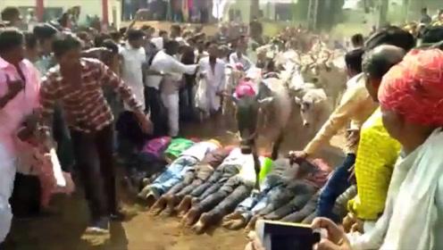 印度古怪风俗:女孩为驱赶邪魅,成年前要被牛群踩踏