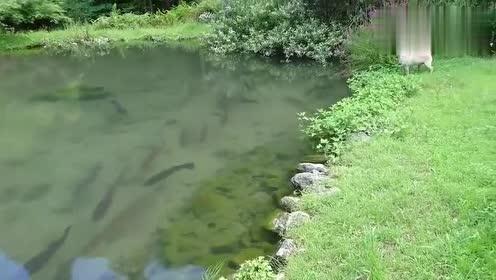 狗狗第一次见这么多鱼,既好奇又兴奋,太搞笑了