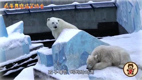 """还是北极熊妈妈靠谱!宝宝睡觉,妈妈不放心还给""""站岗"""""""