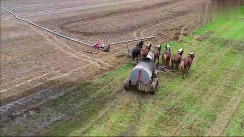 现代农业与传统农业的结合,看看国外这农田施肥方式!
