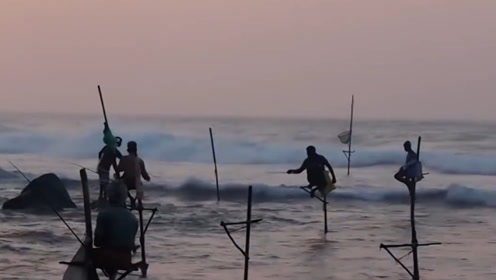 斯里兰卡最牛的钓鱼方式,不用饵料就能钓到鱼,每次都能收获满满!