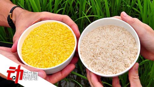 孟加拉国或将在2021年开始种植转基因大米:成全球首个种黄金大米的国家