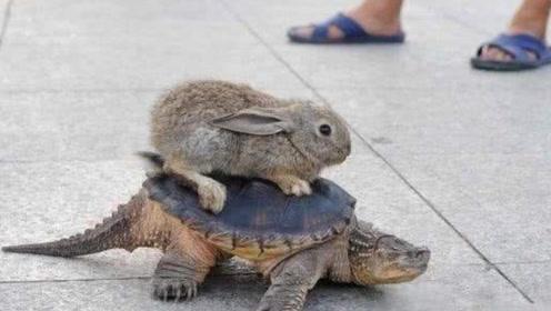 """俗语""""千年的王八,万年的龟,百年的兔子没人追"""",藏有何意?"""