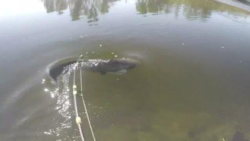 都说声响会惊吓到鱼,但是钓大鱼,一定的声音才能吸引大鱼来咬钩