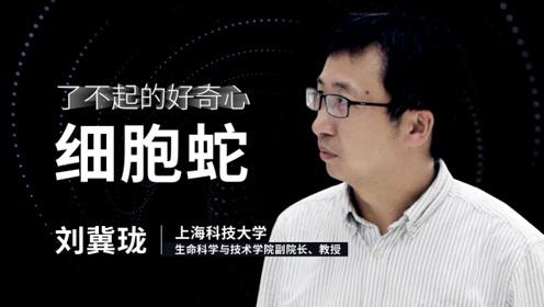 刘冀珑:细胞蛇是什么蛇?
