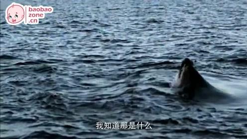 动物世界 08-躲避凶猛的海洋杀手:鱼类