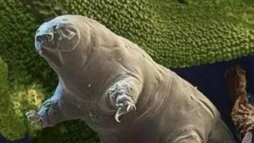你知道水熊吗?它并不是熊类动物,而是即将成为星际物种的微生物