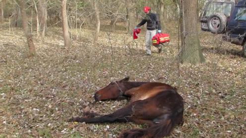 男子在野外发现一匹野马,走近一看,画面太伤心了