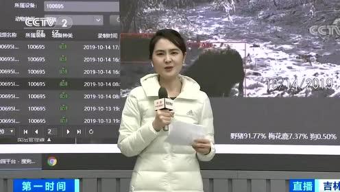 记者探秘 东北虎豹监测太炫酷:AI技术 大数据 视频