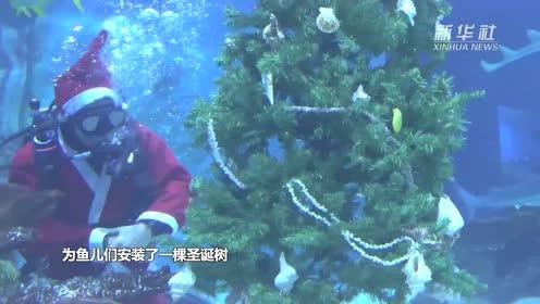 水底圣诞树 鱼儿也过节