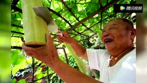 在农村!有一种永远砍不完的瓜!你有见过吗?!