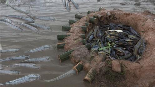 牛人打造强大的捕鱼神器,一次能抓几十条鱼