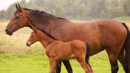 马站着睡觉,一天能睡73次,每次不超过5分钟