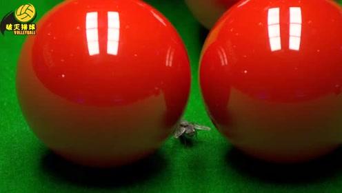 颜丙涛大战希金斯有不速之客入侵?一只苍蝇飞入球台,可笑的是它还不走?