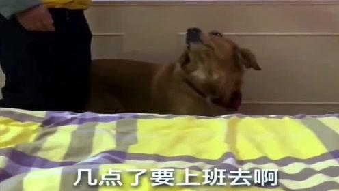男主人打扫卫生吵得女主人头疼,接下来狗狗的做法搞笑了,真是太逗了!