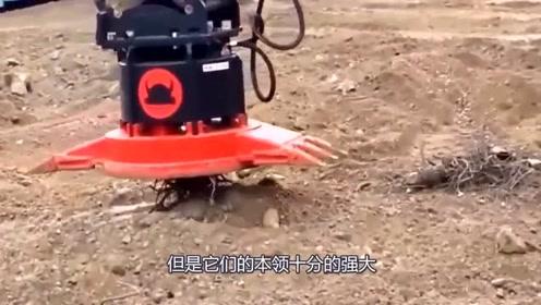 难得一见的工程机械,居然没有一辆是我见过的,我和井底之蛙有何区别?