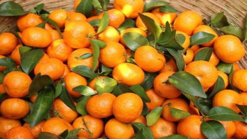 爱吃砂糖橘的注意了,后悔知道晚了,快告诉家人